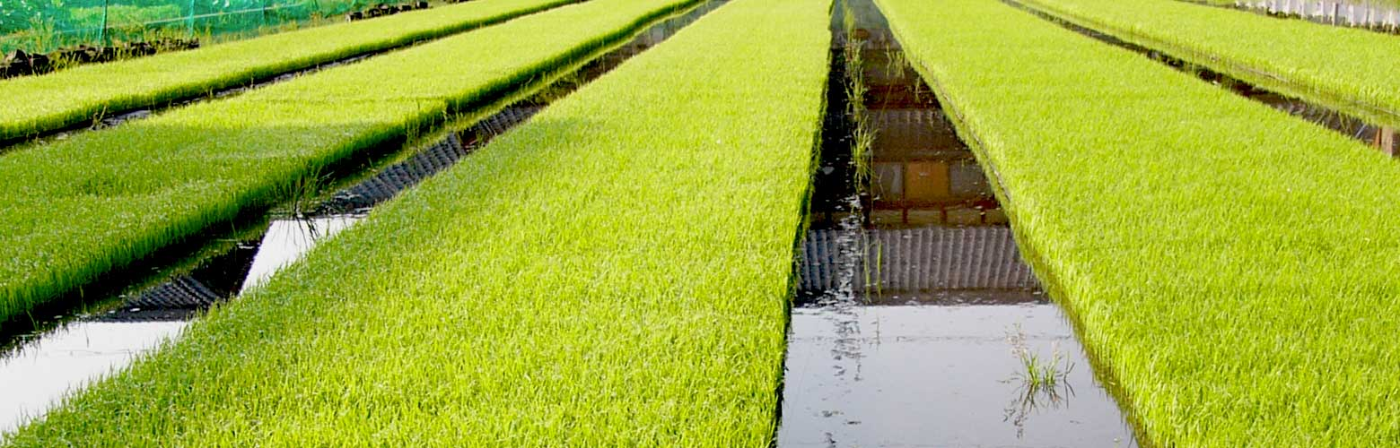 カラダに優しい!ゆきの農園の機能性成分米